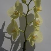 concime orchidee-1