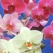concime orchidee-4