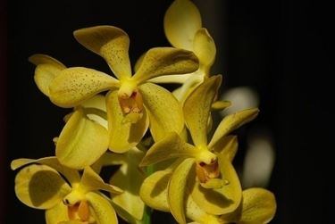 concime orchidee-9