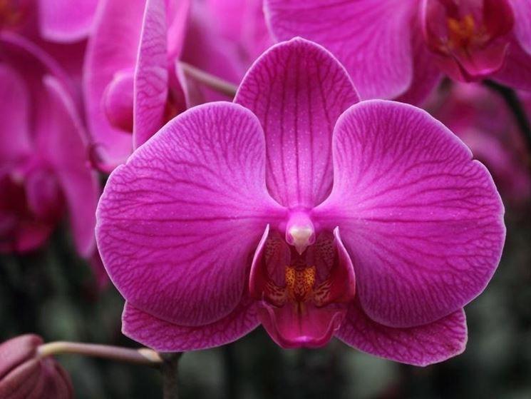 cura delle orchidee-5