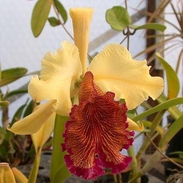 cura delle orchidee-7