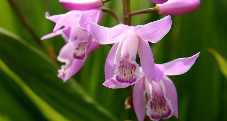 Cura delle orchidee: nutrimento e acqua