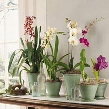 innaffiare orchidea-4