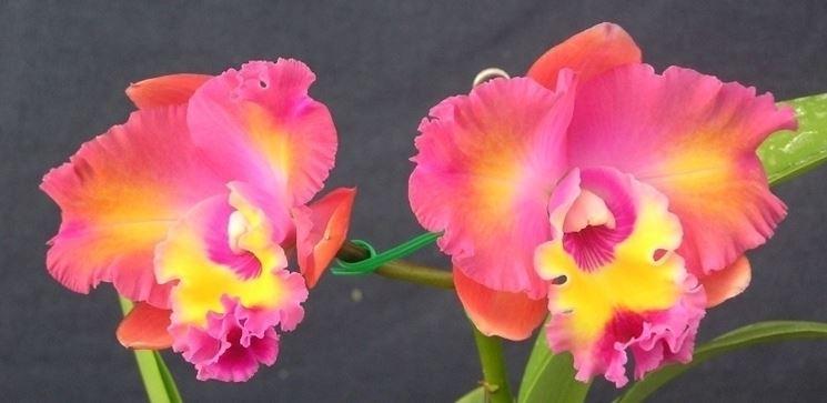 innaffiare orchidea-7