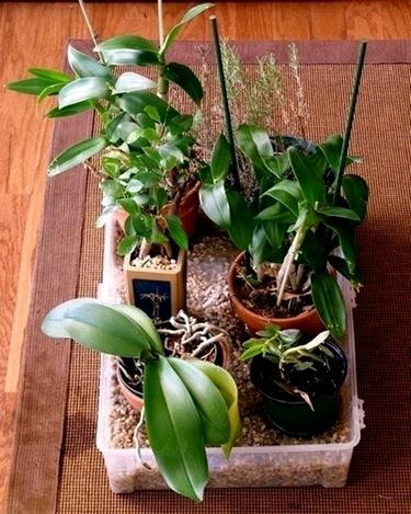 innaffiare orchidea-8