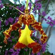 moltiplicazione orchidee-8