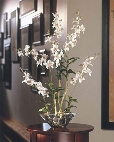 Come far fiorire le orchidee in casa coltivazione for Orchidee in casa