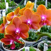 serre orchidee-4