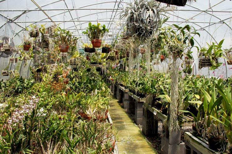 serre orchidee-5