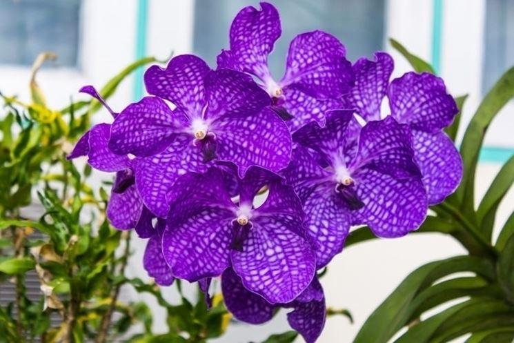 serre orchidee-7
