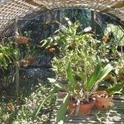 serre orchidee-9