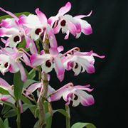 terriccio orchidee-2
