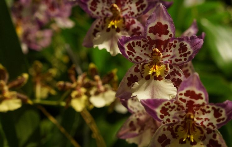 terriccio orchidee-4
