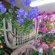 terriccio orchidee-5