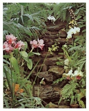 terriccio orchidee-7