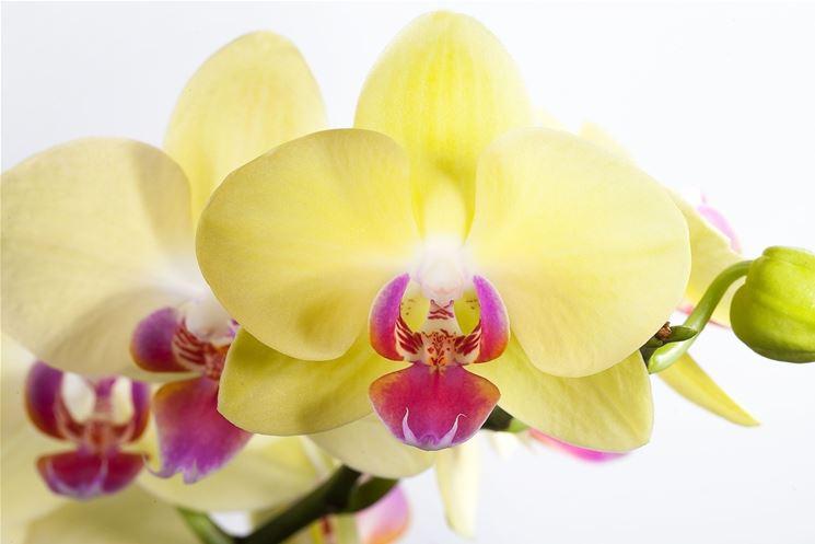 terriccio orchidee-8