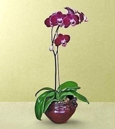 Caratteristiche del vaso per un'orchidea