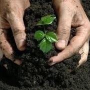 concimare una pianta
