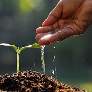 Innaffiare una pianta-3