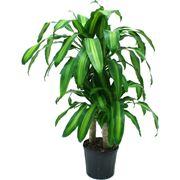 Rinvasare una pianta-5