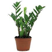 Rinvasare una pianta-6