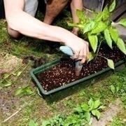 Rinvasare una pianta-7