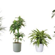 Rinvasare una pianta-8