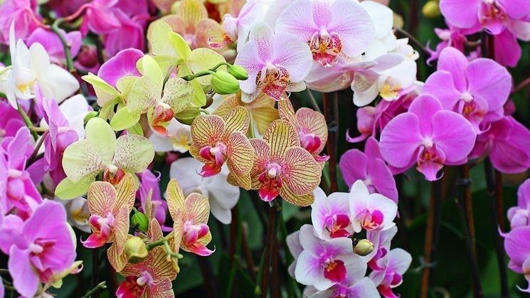 La struttura dei fiori di orchidee