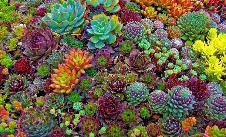 La diffusione delle piante grasse