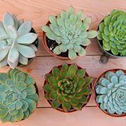 Le origini delle piante grasse