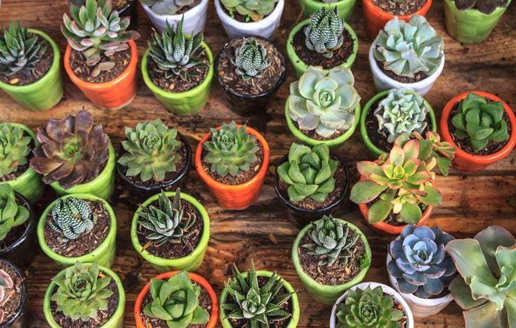 Conosciamo le piante grasse