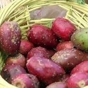 Fiori e frutti del fico d'india