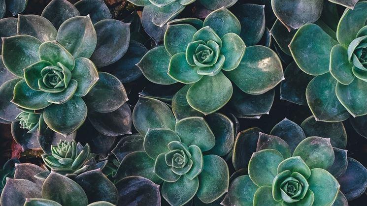 Come coltivare le piante grasse