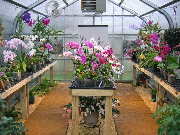 orchidee serre