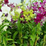 Orchidea: significato nella cultura moderna