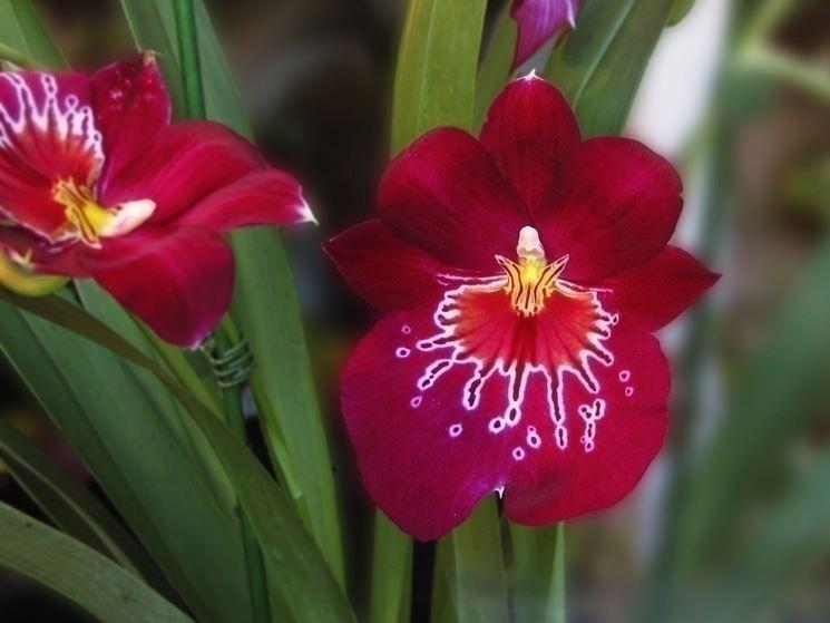 L'acqua e le orchidee