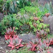 Risposta: Annaffiatura delle piante grasse dopo il rinvaso