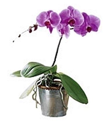 Risposta : orchidea in giardino