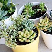 Risposta : piante grasse in estate