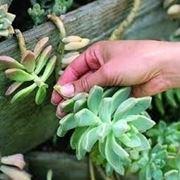 Risposta : piante grasse