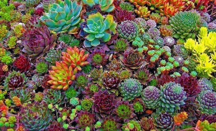 Tutti i generi delle piante grasse