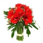 bouquet di amarillis rossi e bacche-1
