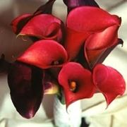 bouquet di calle arancio-1