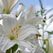 bouquet di colori tenui-1