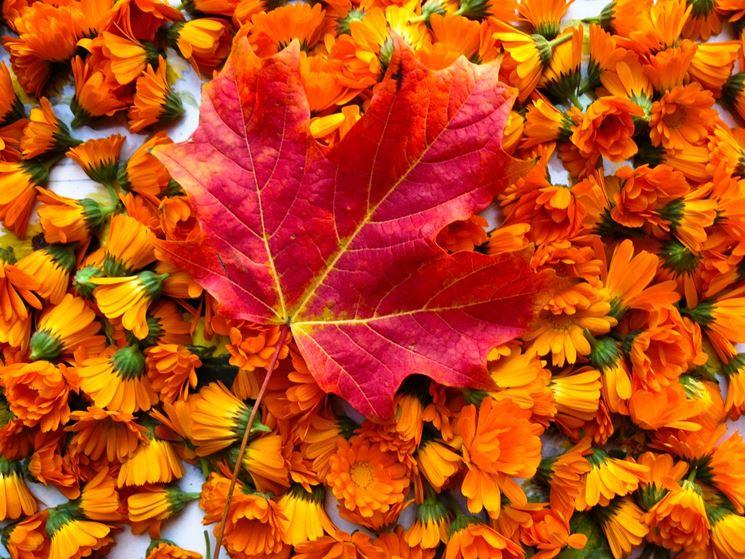 Fiori Autunnali.Bouquet Di Fiori Autunnali Regalare Piante Bouquet Di Fiori