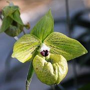 centrotavola di fiori bianchi-1