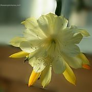 mazzi di fiori autunnali-1