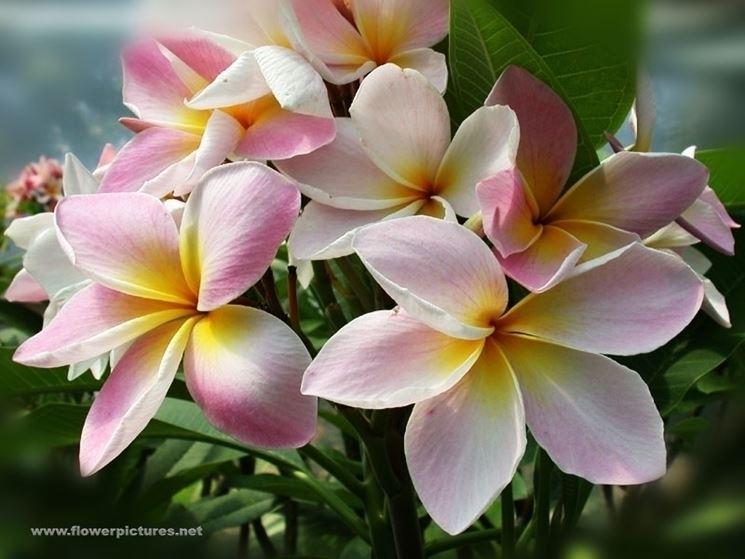mazzi di fiori primaverili-1