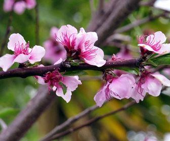 piante da frutto