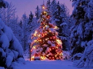Albero Natale-9
